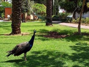 Island Suites Hotel|escape