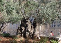 [KASKAD 30]#30 Израиль + Иордания + Мертвое море (Натания/Тель-Авив + Мертвое море + Амман)-2007