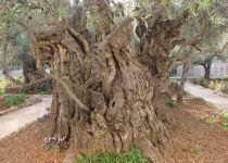 Монастыри Иудейских гор, Хеврон с частным гидом-2334